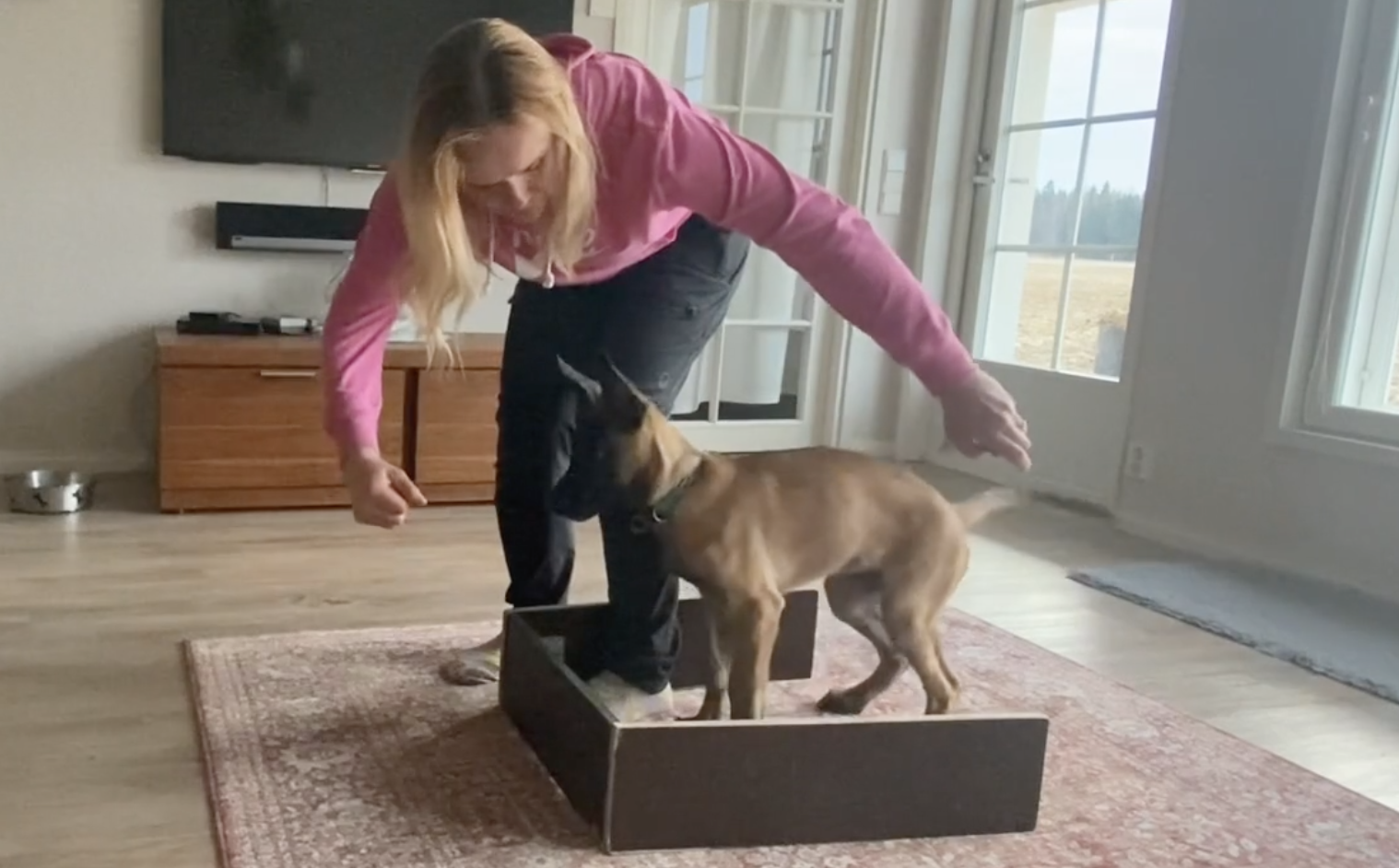 How to teach sit and stand for an IGP sport puppy