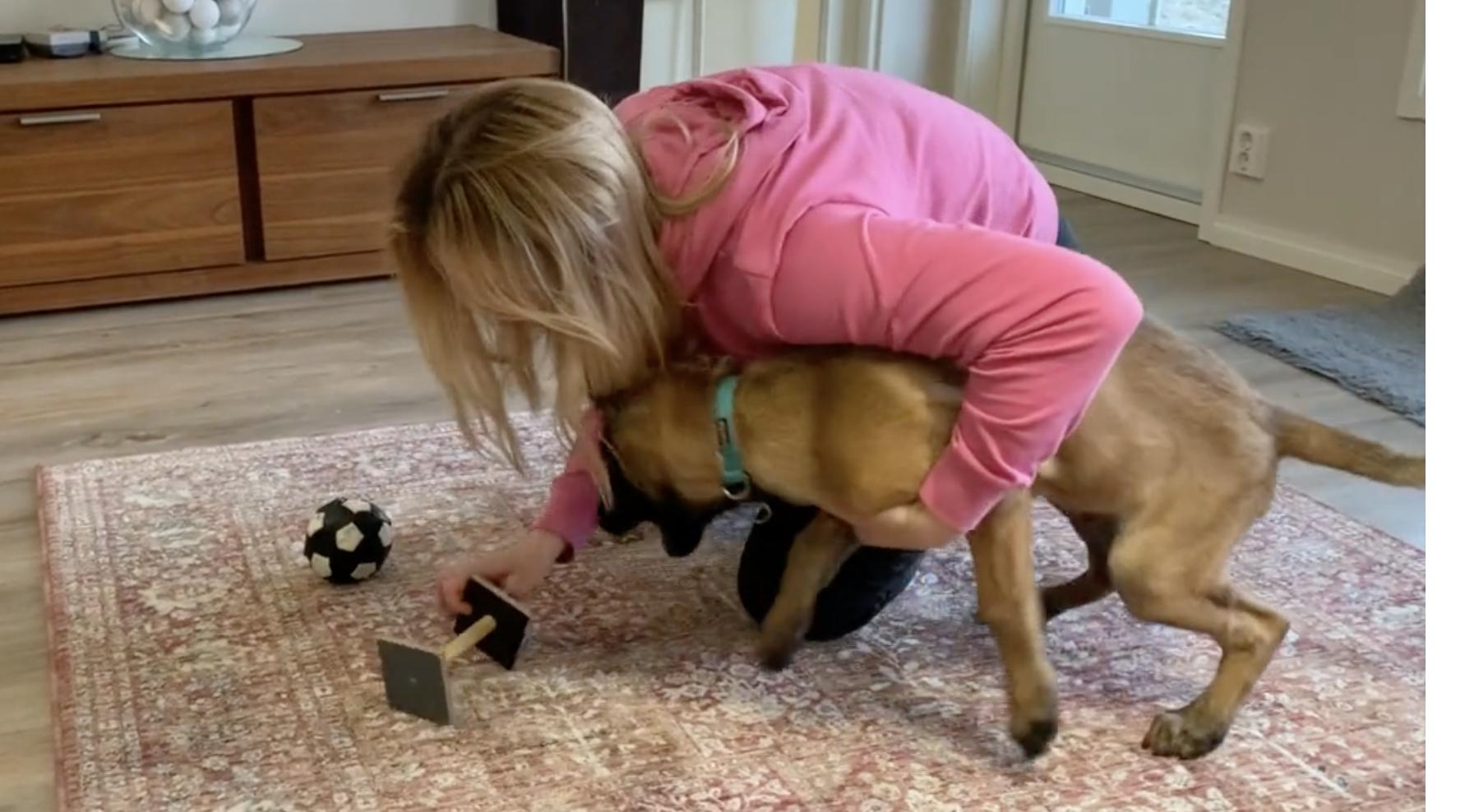 How to teach a fast retrieve to sport dogs