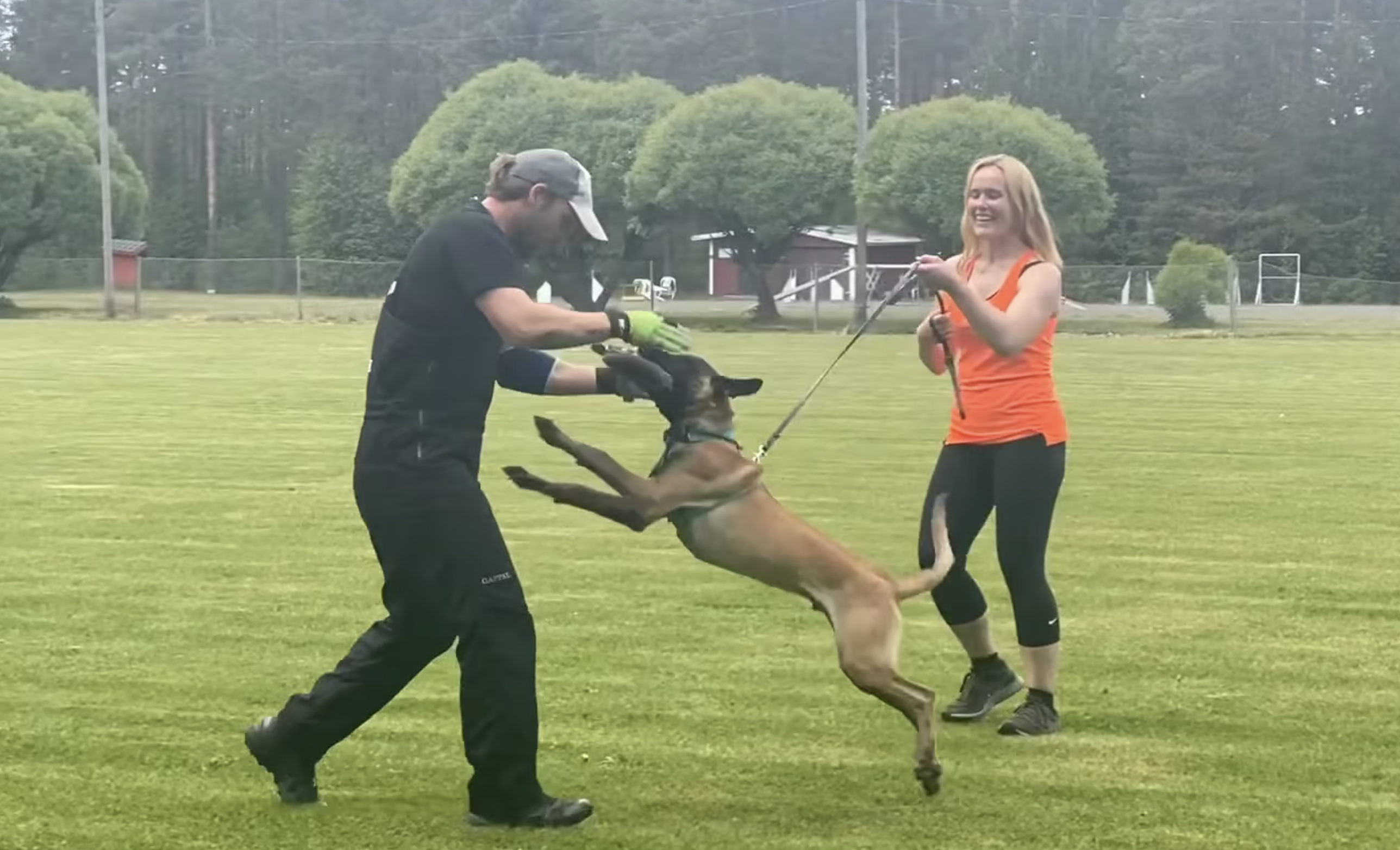 Supporting puppy's self-confidence and motivation in protection training